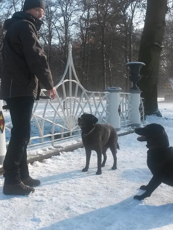 Ton van der Meijden Met de hondjes